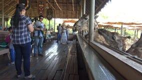 la familia 4K con los niños está alimentando una jirafa en el parque zoológico del mundo del safari en Bangkok almacen de metraje de vídeo