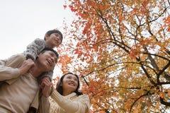 La familia que camina a través del parque en el otoño, niño pequeño que se sienta en sus padres lleva a hombros Fotos de archivo