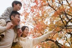 La familia que camina a través del parque en el otoño, niño pequeño que se sienta en sus padres lleva a hombros Imagenes de archivo