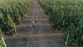 La familia rural feliz se divierte mientras que cosecha en jardín de la manzana en verano almacen de metraje de vídeo
