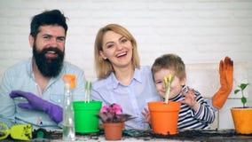 La familia se está divirtiendo después de plantar las flores en potes La patria canta canciones y las flores de la planta en pote almacen de metraje de vídeo