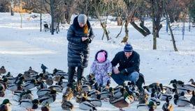 La famille alimente des canards en parc de ville de Tver Photographie stock libre de droits