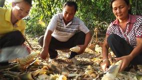 La famille chinoise coupent des pousses de bambou en petits morceaux yunnan La Chine image libre de droits