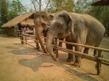 La famille d'éléphant est heureuse dans le petit corral en bois image stock