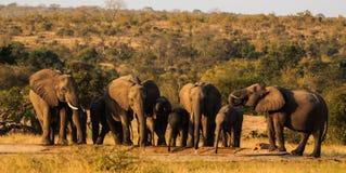 La famille d'éléphant visite le point d'eau photo libre de droits