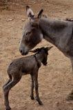 La famille de DonkeyImage libre de droits