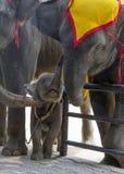 La famille de l'éléphant dans le zoo Photographie stock