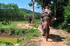 La famille heureuse monte un éléphant Le papa et deux fils mignons passent par sur un éléphant par la jungle tropicale Front View photo libre de droits