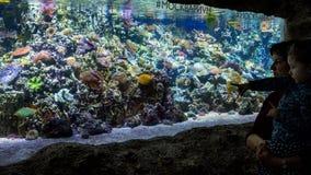La famille regarde les coraux colorés dans le bel aquarium Photographie stock libre de droits