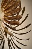 La fan hecha de plumas coloridas Foto de archivo libre de regalías