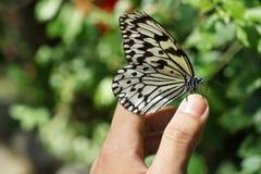 La farfalla immagine stock libera da diritti