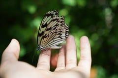 La farfalla immagine stock