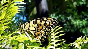 La farfalla Fotografia Stock