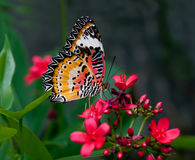 La farfalla Fotografie Stock Libere da Diritti