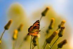 La farfalla Immagini Stock