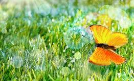 Farfalla arancio su erba verde Fotografia Stock Libera da Diritti