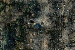La farfalla blu si siede su una pietra fotografia stock libera da diritti