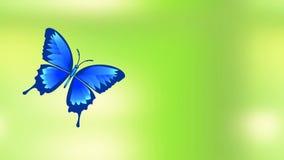 La farfalla blu volante si siede sulla fioritura di un fiore, sulla molla animata o sul video dell'estate illustrazione di stock