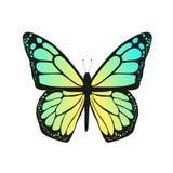 La farfalla con le ali blu Immagine Stock