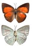 La farfalla di Sunbin Fotografie Stock
