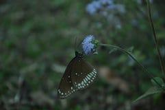 La farfalla di volo è bella fotografie stock