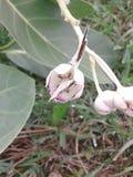 La farfalla due si siede insieme sul fiore fotografia stock