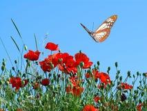 La farfalla ed i fiori Fotografia Stock Libera da Diritti