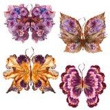 La farfalla floreale fatta ha asciugato il fiore della petunia urgente petali del giglio Fotografie Stock Libere da Diritti
