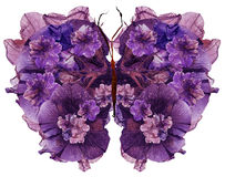 La farfalla floreale fatta ha asciugato il fiore della petunia urgente petali del giglio Fotografie Stock