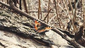 La farfalla in foresta video d archivio