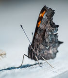 La farfalla luminosa Fotografie Stock Libere da Diritti
