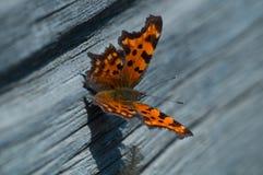 La farfalla luminosa Immagine Stock