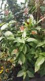 La farfalla macchia la natura bella fotografie stock libere da diritti