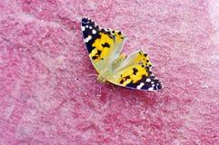 la farfalla riposa il piccolo guscio di testuggine Fotografie Stock