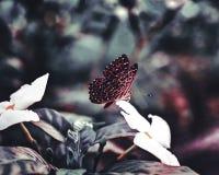 La farfalla si è accinta alla mosca via fotografia stock libera da diritti