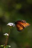 La farfalla si è appollaiata sul verticale del fiore selvaggio Fotografia Stock
