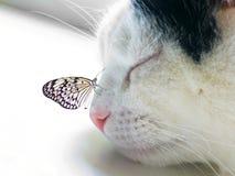 La farfalla si è seduta su un radiatore anteriore del gatto di sonno Fotografie Stock Libere da Diritti