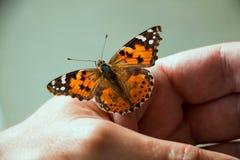 La farfalla si è seduta sulla palma di un uomo fotografia stock
