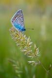 La farfalla su una filiale Immagini Stock Libere da Diritti