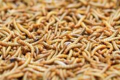 la farine worms le fond image stock
