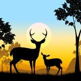 La fauna de los ciervos indica a Safari Animals And Evening Fotografía de archivo