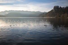 La fauna selvatica ducks con la vista sbalorditiva sul castello sul bello lago sanguinato circondato dalle alpi julian Fotografia Stock