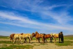 La fauna selvatica stupefacente di deserto del Gobi, Mongolia fotografia stock libera da diritti