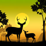 La faune de cerfs communs indique Safari Animals And Evening Images libres de droits