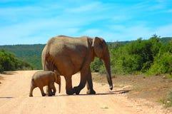 La faune de l'Afrique Image libre de droits