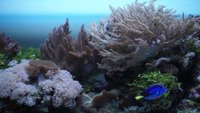 La faune marine dans l'aquarium banque de vidéos