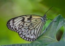 La faune merveilleuse de l'île de Penang, Malaisie images libres de droits