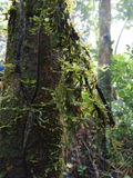 La felce è nella foresta immagini stock libere da diritti