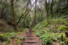 La felce ha allineato la traccia di escursione, Sugarloaf Ridge State Park, la contea di Sonoma, la California immagini stock libere da diritti