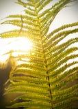 La felce va al sole Lo sfondo naturale immagine stock